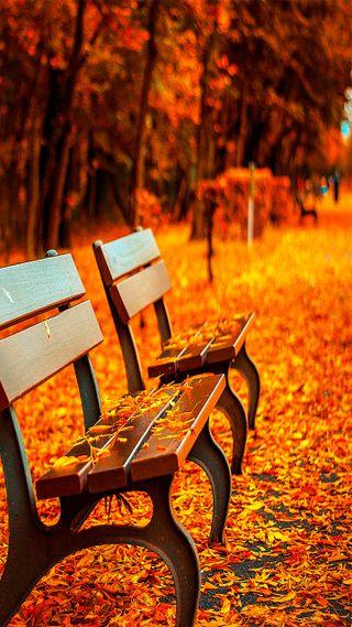 Обои на телефон скамейка, силуэт, природа, покинуть, парк, осень, оранжевые, autumn in the park