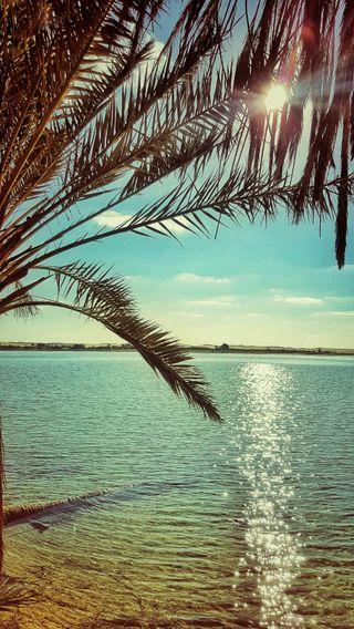 Обои на телефон солнце, рай, озеро, небо, египет, вода, palmtree