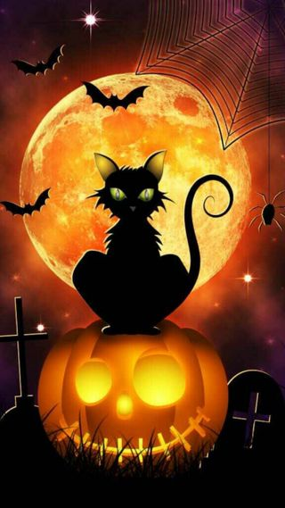Обои на телефон хэллоуин, черные, ужасные, страшные, кошки, бу, halloween cat