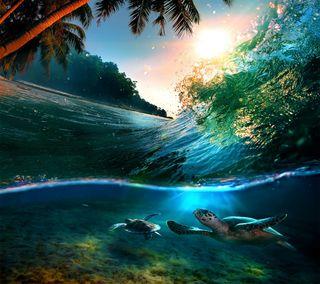 Обои на телефон черепахи, черепаха, солнце, пляж, море, естественные, волны, волна, tropicale sun