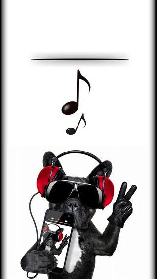 Обои на телефон фан, собаки, ноты, наушники, музыка, мой, крутые, забавные, жизнь, грани, swag, s8, s7, music is my life