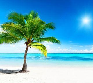 Обои на телефон пальмы, пляж, море, oceansun