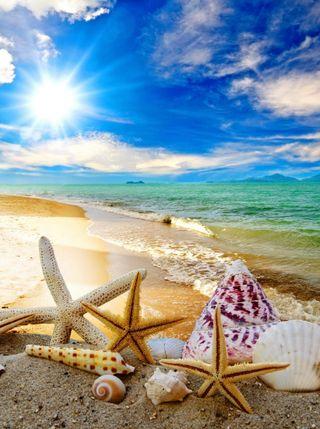 Обои на телефон солнце, раковина, природа, пляж, песок, морская звезда, море, лето, вид, берег