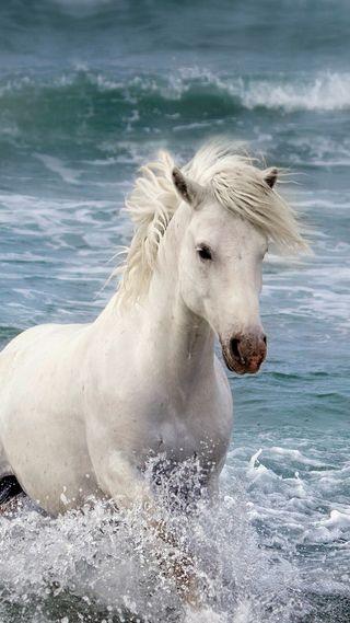 Обои на телефон лошади, лошадь, картина, единорог, белые