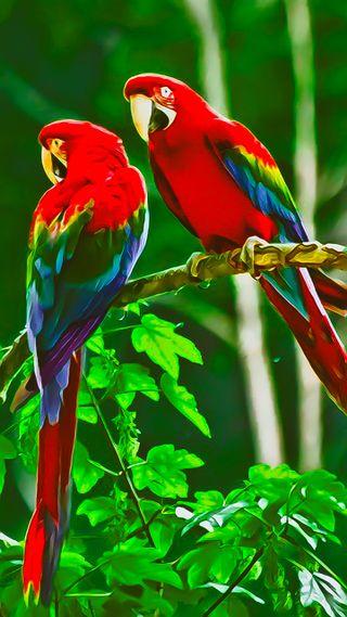 Обои на телефон love, love birds, lovebirds, любовь, синие, красые, зеленые, птицы, попугай