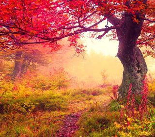 Обои на телефон путь, природа, осень, лес, деревья
