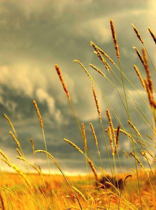 Обои на телефон нокиа, приятные, поле, золотые, вид, nokia live, golden field