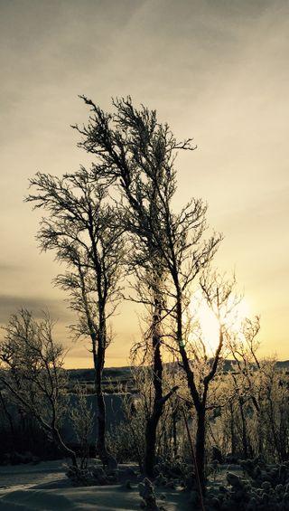 Обои на телефон солнце, желтые, снег, природа, прекрасные, зима, закат, деревья
