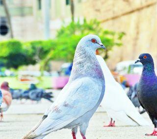 Обои на телефон эффект, птицы, прекрасные, beautiful bird