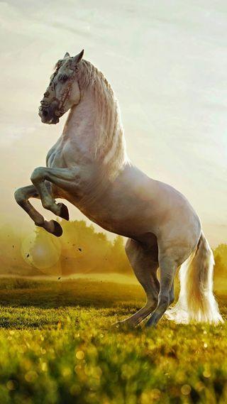 Обои на телефон сильный, свобода, прекрасные, лошадь, белые, prancing, prance, caballos