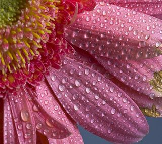 Обои на телефон лепестки, приятные, капли, вода, взгляд, water drops petals