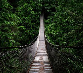 Обои на телефон джунгли, путь, мост, дерево