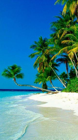 Обои на телефон остров, пляж, пальмы, океан, море, вода, бирюзовые, turquoise water, sland, island palms