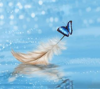 Обои на телефон перо, бабочки, and butterfly