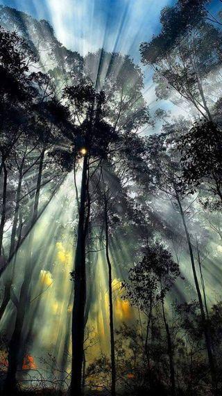 Обои на телефон сияние, природа, огни, дерево