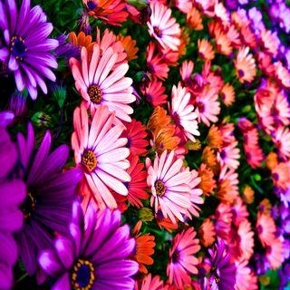 Обои на телефон растения, цветы, цветные