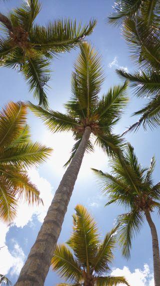 Обои на телефон тропические, солнце, пальмы, остров, дерево, palms sun