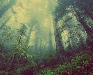 Обои на телефон природа, лес, selva