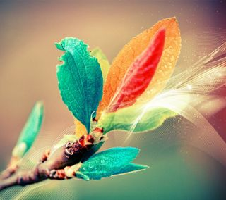 Обои на телефон листья, природа, дерево, абстрактные, hd