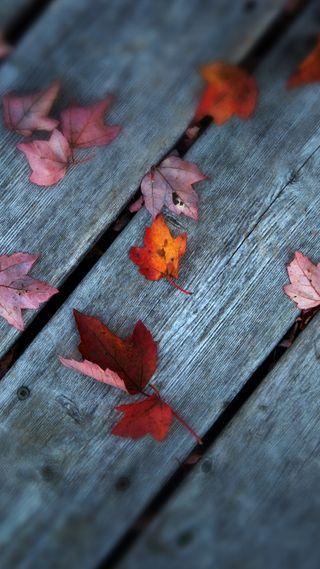 Обои на телефон ок, приятные, природа, покинуть, осень, крутые, красые, красота, классные
