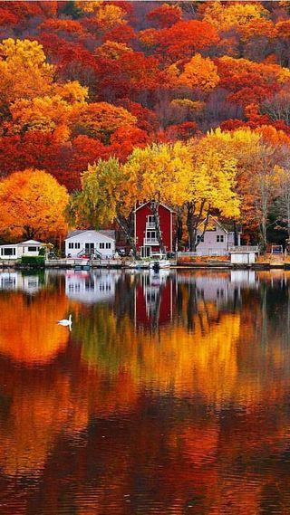Обои на телефон озеро, природа, осень