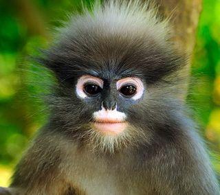 Обои на телефон питомцы, обезьяны, милые, животные, hd, cute monkey