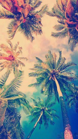Обои на телефон красота, природа, пальмы, облака, лето, деревья, s8, s7