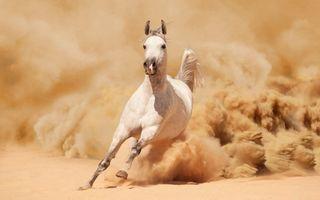 Обои на телефон лошади, лошадь, гоночные, белые, арт, art