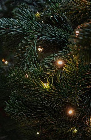 Обои на телефон фейерверк, рождество, праздник, огни, новый, дерево, год, винтаж, evergreen, 2017