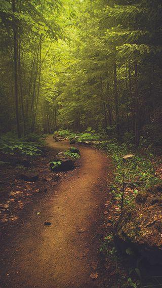 Обои на телефон лес, зеленые