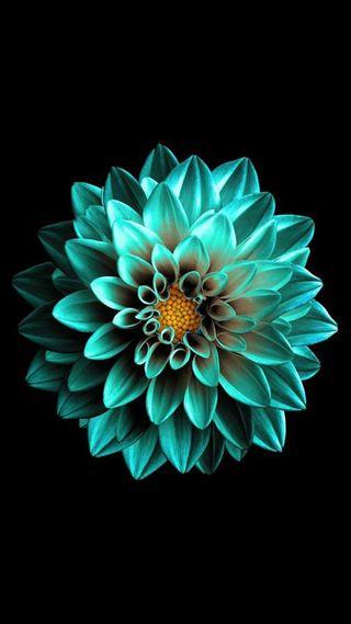 Обои на телефон амолед, черные, цветы, супер, лотус, джокер, айфон, manishgaikar, iphone, amoled wallpaper, amoled flower amoled