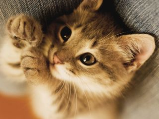 Обои на телефон щенки, питомцы, милые, маленький, кошки, котята, hd