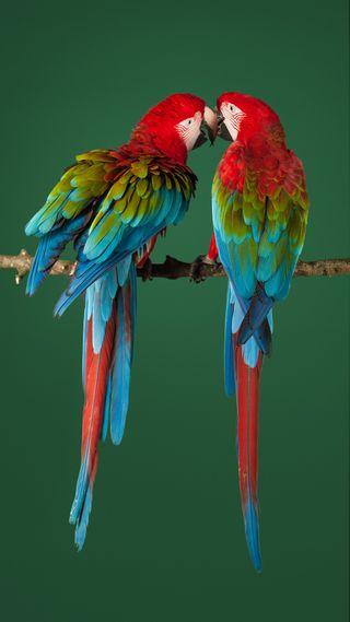 Обои на телефон macaw, zte, zte axon, красые, зеленые, красочные, цветные, животные, птицы, попугай, попугаи