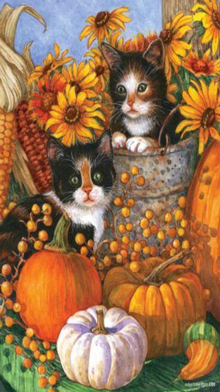 Обои на телефон коты, осень