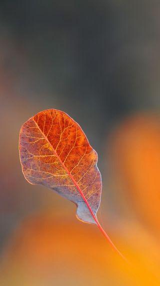 Обои на телефон макро, природа, осень, листья, боке, 1080p