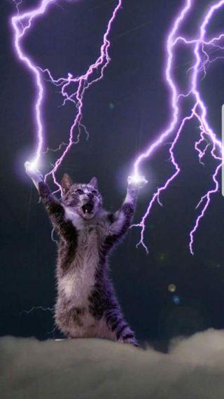 Обои на телефон райден, кошки, lightening