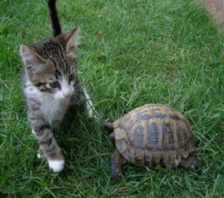 Обои на телефон черепаха, питомцы, кошки, животные, cat and turtle