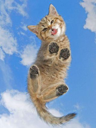 Обои на телефон милые, кошки, котята, коты, забавные, hd