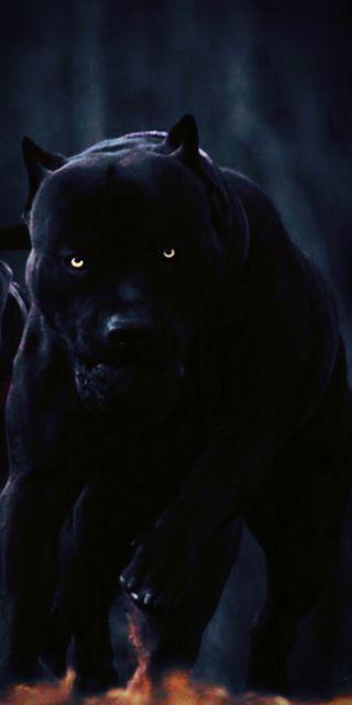 Обои на телефон трэп, черные, сша, собаки, питбуль, глаза, usa, ro, drak, black pitbul dog, 2020