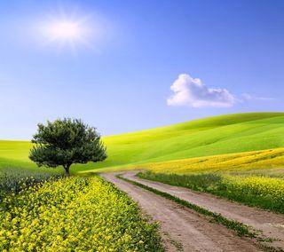 Обои на телефон поле, зеленые, дерево, весна