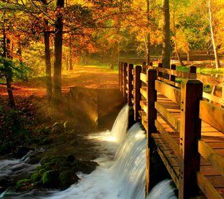 Обои на телефон осень, природа, alley