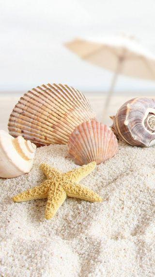 Обои на телефон ракушки, пляж