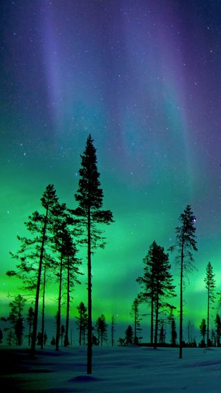 Обои на телефон северный, аврора, огни, небо, лес, дерево, northern lights