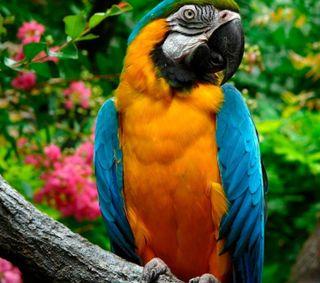 Обои на телефон попугай, питомцы, животные