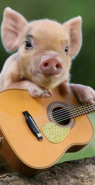 Обои на телефон свинья, румыния