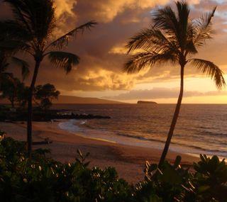 Обои на телефон природа, пальмы, деревья, великолепные, palms 5