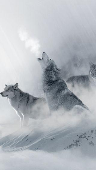 Обои на телефон холод, снег, природа, зима, волк