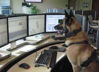 Обои на телефон полиция, закон, law enforcement, k9, k-9, dispatch
