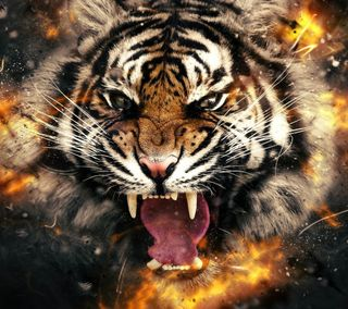 Обои на телефон взрыв, тигр, огонь, кошки, животные, explode tiger