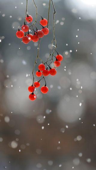 Обои на телефон ягоды, холод, фрукты, снег, природа, красые